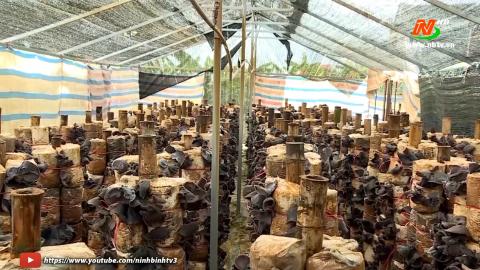 Vì chất lượng cuộc sống: Hiệu quả kinh tế trồng nấm an toàn