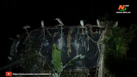 Vì chất lượng cuộc sống: Cần chấm dứt hành vi đánh bắt chim hoang dã