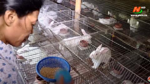 Vì chất lượng cuộc sống: Chăn nuôi thỏ an toàn