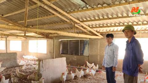 Vì chất lượng cuộc sống: Đệm lót sinh học - Giải pháp bảo vệ môi trường trong chăn nuôi