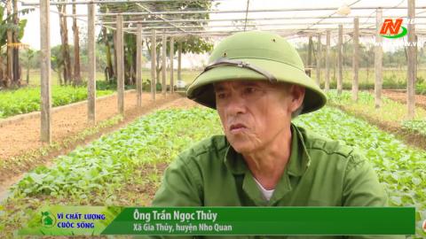 Vì chất lượng cuộc sống: Gia Thủy trồng rau an toàn