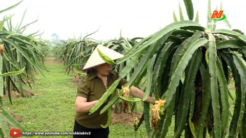 Vì chất lượng cuộc sống: Khánh Nhạc trồng cây ăn quả theo hướng an toàn