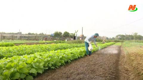Vì chất lượng cuộc sống: Lạm dụng phân bón hóa học trong trồng rau