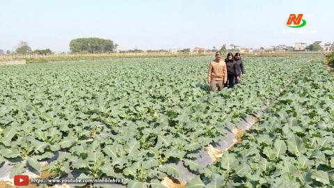 Vì chất lượng cuộc sống: Mai Sơn mở rộng diện tích trồng rau an toàn