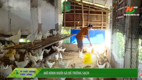 Vì chất lượng cuộc sống: Mô hình nuôi gà đẻ trứng sạch
