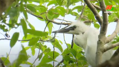 Vì chất lượng cuộc sống: Ninh Bình bảo tồn các loài động vật hoang dã