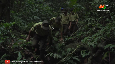 Vì chất lượng cuộc sống: Tăng cường phát triển, bảo vệ rừng