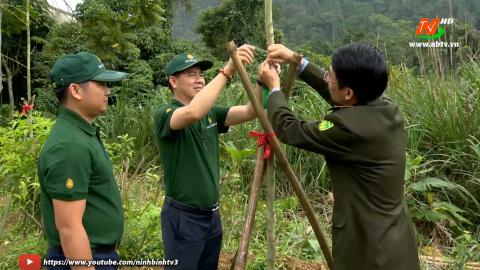 Vì chất lượng cuộc sống: Thêm xanh cho cánh rừng già