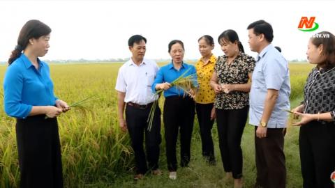 Vì chất lượng cuộc sống: Trồng lúa theo hướng hữu cơ bảo vệ môi trường bền vững