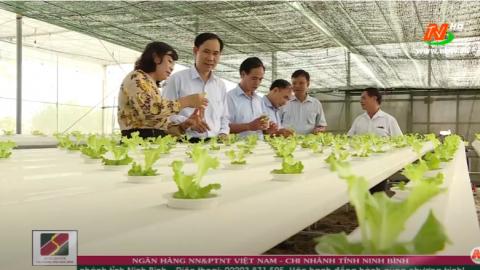 Xây dựng Nông thôn mới: Đẩy mạnh sản xuất hàng hóa để xây dựng Nông thôn mới