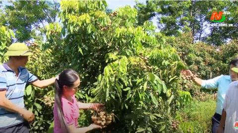 Xây dựng Nông thôn mới: Gia Viễn tái cơ cấu trong sản xuất nông nghiệp